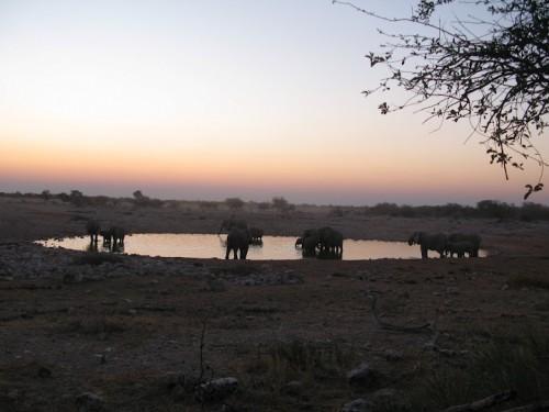 Elefantes en el waterhole de Okuakuejo de Etosha Park