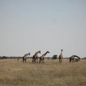 Etosha Park de Namibia