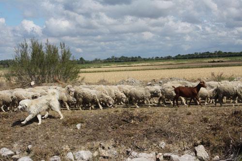 Vida rural junto al canal @3viajes