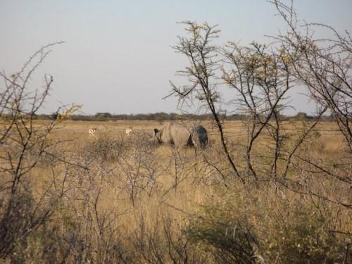 Rinoceronte en Etosha Park