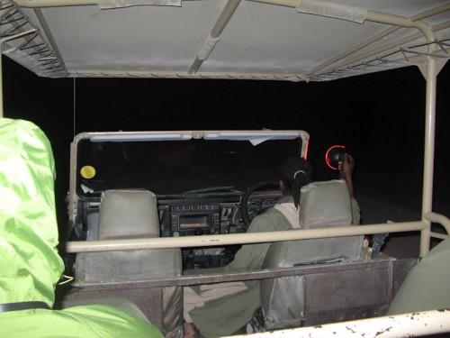 Safari nocturno en Etosha Park