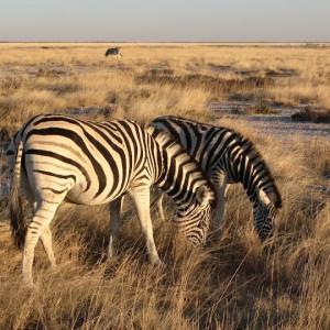 Ruta por Namibia de dos semanas