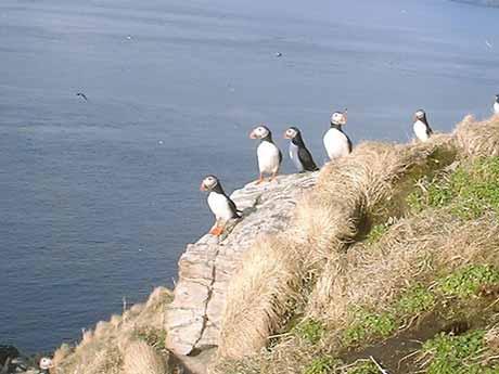 Avistamiento de aves en Noruega
