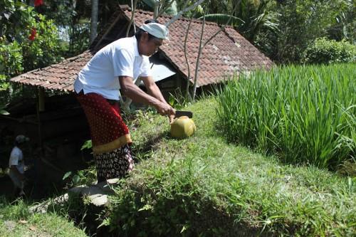 Comiendo coco fresco en Bali