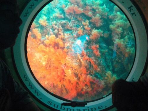 El coral de Jeju