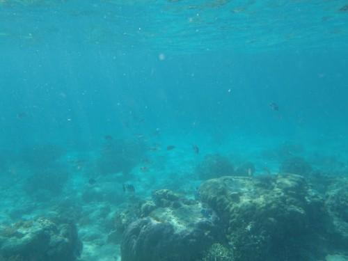 Haciendo snorkel en Gili