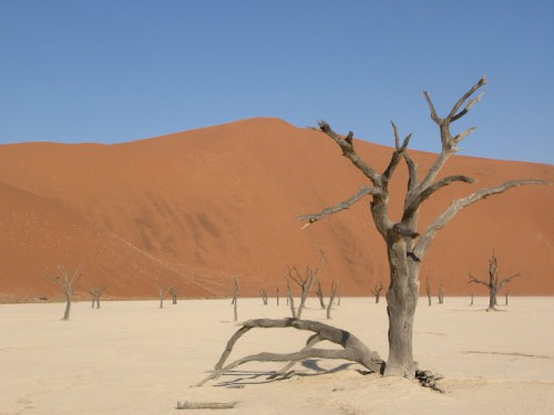 Árboles del Petrified Forest de Sossusvlei en Namibia