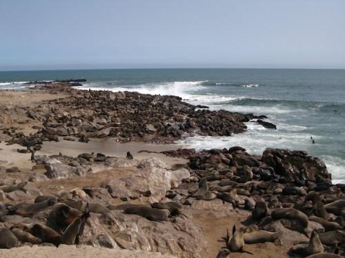 Focas y leones marinos en el Cape Cross de Namibia