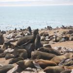 Leones marinos en Cape Cross de Namibia