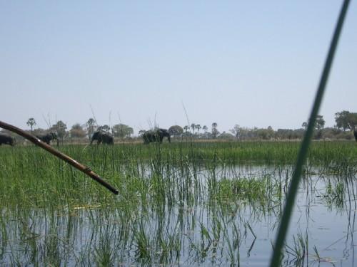 El delta del Okavango con elefantes en Botswana (@ Wikipedia)