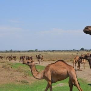 ¿Qué llevarse en un viaje a África?