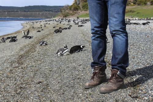 Con mis Panama Jack entre pingüinos en El Fin del Mundo
