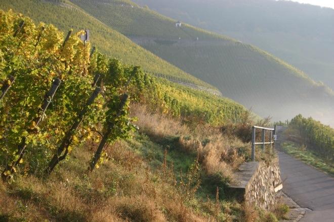 Viñedo de Calmont. Fuente: http://www.mosellandtouristik.de/es/