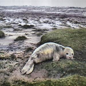 Centro de rehabilitación de focas en Pieterburen