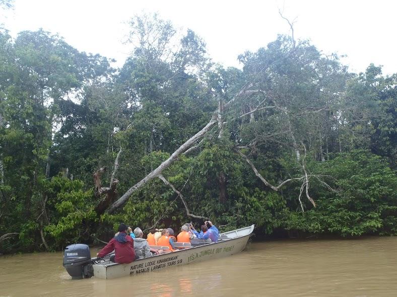 Viendo animales desde la barca en Kinabatangan