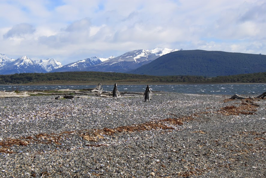 Pingüinos en el canal Beagle en Ushuaia