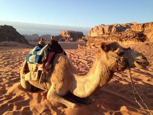 Camello en el desierto de Wadi Rum @3viajes