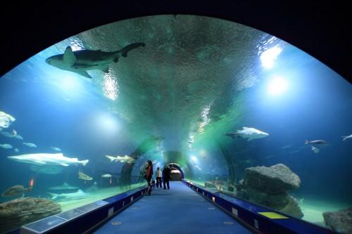 Túnel submarino del Oceanogràfic en Valencia @CAC
