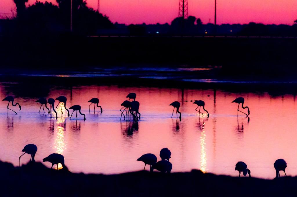 9 cosas para ver en Huelva que no sabías - Salinas Isla Cristina