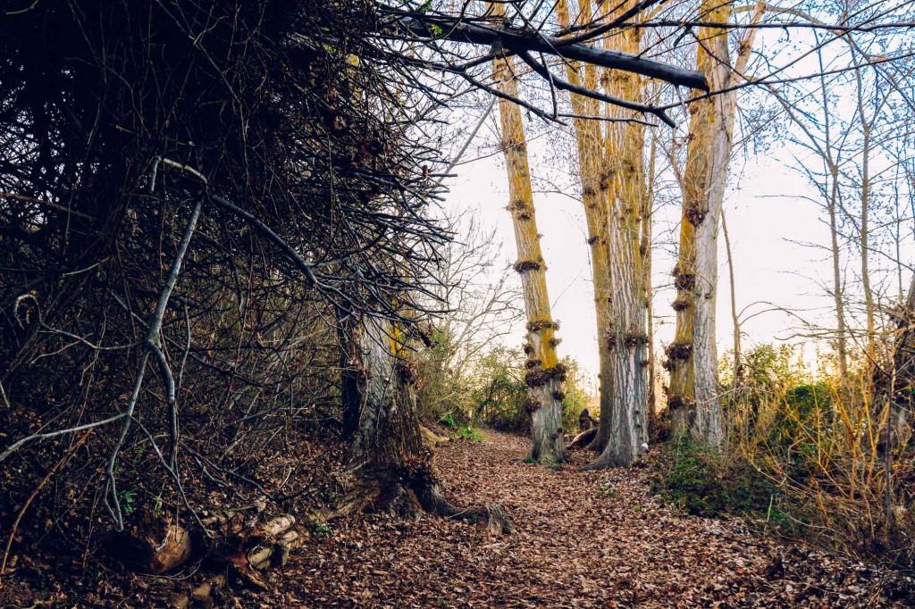 Reserva Natural Castronuno - Ruta Almendros