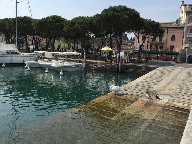 Cisnes en el puerto de Desenzano del Garda