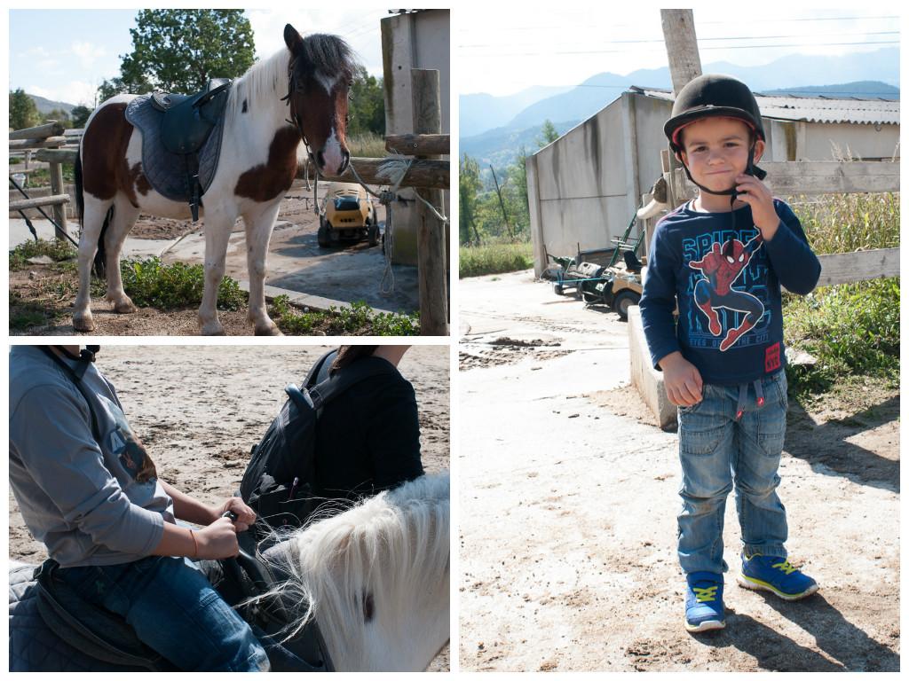 Ponis en el Parc d'Activitats Cerdanya