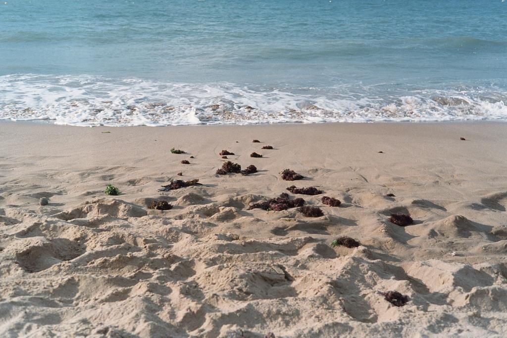 Playa de la isla de Ré
