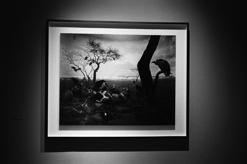 Dioramas, Hiroshi Sugimoto