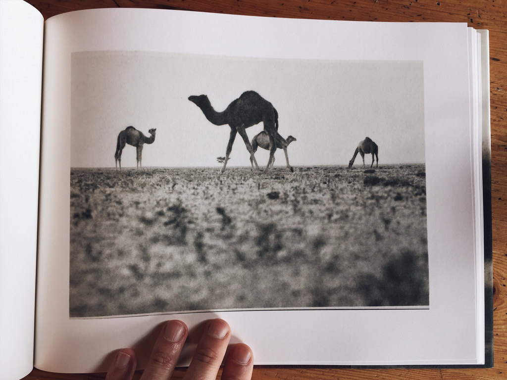incomodidad del caballo qatarí
